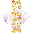 Pumpkin. Hand drawn watercolor painting on white background. Watercolor illustration with a splash. - 223513641