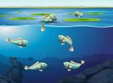 Set of fish underwater - 223513682