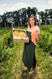 Yellow currant growers engineer working in  garden with harvest, woman  with box of berries