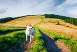 Alone white dog on mountains road against the backdrop of an incredible mountain landscape. Travel concept - 223532457