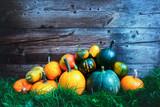 Different kind of pumpkins in garden grass near old wooden wall. Halloween background - 223536279
