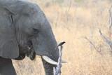 Elefant  - 223536486