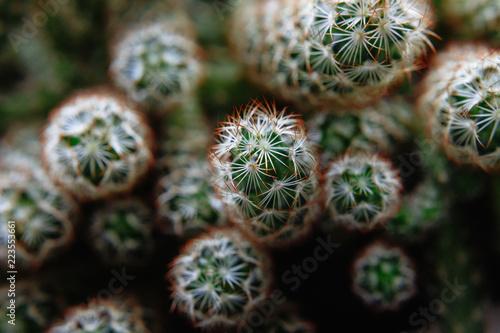 Nature cactus - 223553661