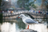White seagull in a park