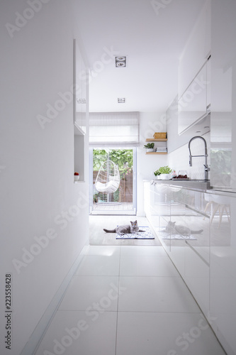 Real photo of a clean, white kitchen interior with glossy cupboards, steel faucet and a gray cat on the floor