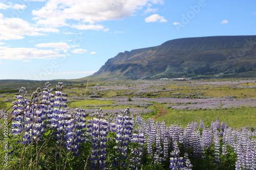 Foto Murales Panorama Landschaft Neuseeland Blumen
