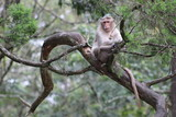 Old monkey calmly sitting on the branch - 223571603