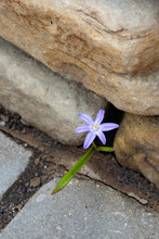 "Постер, картина, фотообои ""flowers on stone"""