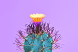 Fashion Cactus with flower in Trendy Color.Minimal