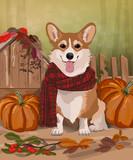 Pembroke Welsh corgi puppy.  pumpkins, autumn vector illustration