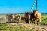 herd of horses on the farm goes - 223596497
