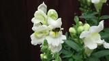 Bee hiding in white flower - 223601889