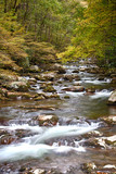 Early Autumn River Scene in the Smoky Mountains - 223605871