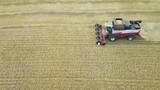 Combines harvest sunflower. Aerial shoot - 223670612