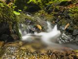 Langzeitbelichtung eines kleinen Gebirgsbaches im Herbst. - 223689258