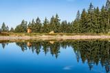 Bäume spiegeln sich im See - 223697699
