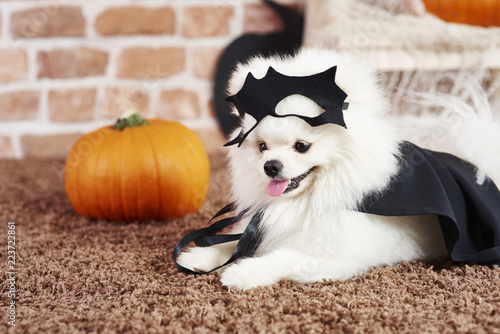 Cute puppy in halloween costume