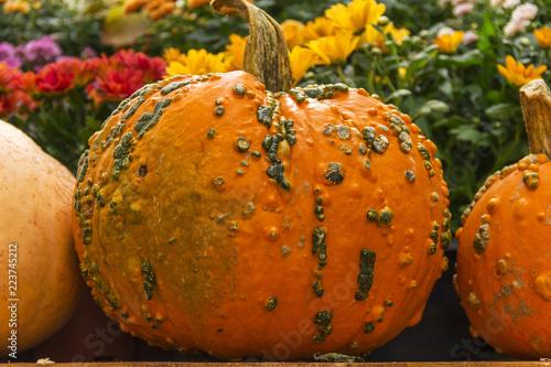 The photo of pumpkin - 223745212