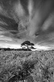 Stunning Summer sunset landscape image of Bratley View in New Forest National Park England black and white image - 223792268