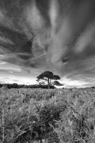 oszalamiajaco-lato-zmierzchu-krajobrazu-wizerunek-bratley-widok-w-nowego-lasowego-parka-narodowego-anglia-czarny-i-bialy-wizerunku