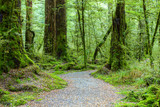 Walking route  in the temperate rainforest, Fiordland National Park, South Island, New Zealand - 223859668