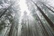 Leinwandbild Motiv forest trees against Misty sky