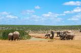 Elefanten - 223876087