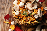 variety of raw mushrooms on wooden table. chanterelle, oyster and other fresh mushrooms.