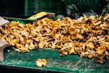 vente de girolles à Montmartre - 223962241