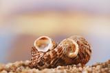 tropical seashell sea shell with ocean , beach and seascape - 223974618