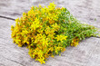 Hypericum - St Johns wort plants on wooden board, top view. Copy Space. Close Up
