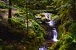 Edelfrauengrab Wasserfälle im Schwarzwald  - 223999204