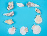 Collection of seashells forming a frame on a bright blue background (top view, copy space in the center for your text) - 224005600