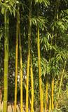 Bambous © hcast