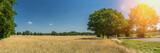 Getreidefeld reif im Sonnenschein Straße - 224052453