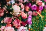 Lot of peonies, close up. - 224059432