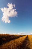Field dirt road leading through wheat - 224064097