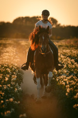 Galopp durch blühendes Feld © Nadine Haase