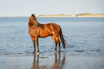 Pferd im Meer © Nadine Haase