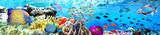 Panoramik Akvaryum ve Balıklar
