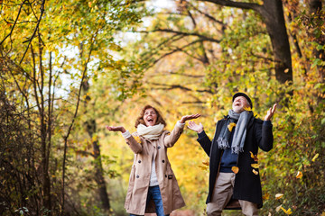 Senior couple on a walk in a forest in an autumn nature, throwing leaves.
