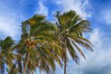Beautiful tropical palm trees on blue sky background - 224156611