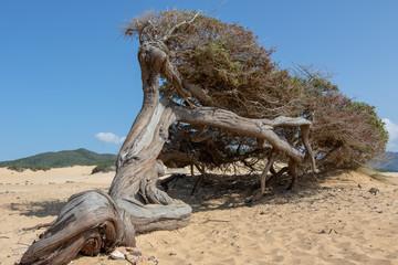 Piscinas Dune, Sardinia Italy
