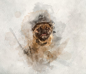 Sir pug dog in a cylinder and bowtie in watercolors.