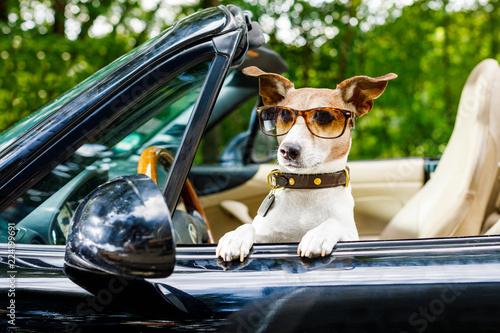 Leinwanddruck Bild dog drivers license  driving a car