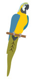 Vector Parrot Illustration