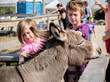 Crowded donkey