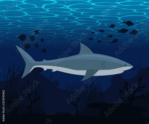 Fototapeta Shark in sea. Vector illustration.