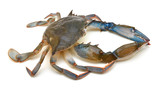 Blue Crab with white background - 224254053