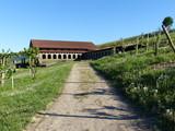 Weg zur römischen Villa in Longuich / Mosel - 224257247